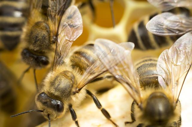 Včelárstvo je jednou z možností na podnikanie. Skutočnosť, že bývate v meste, nie je prekážkou.